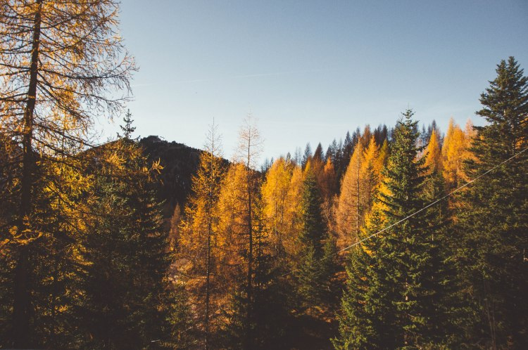 2.fall (4 di 7)